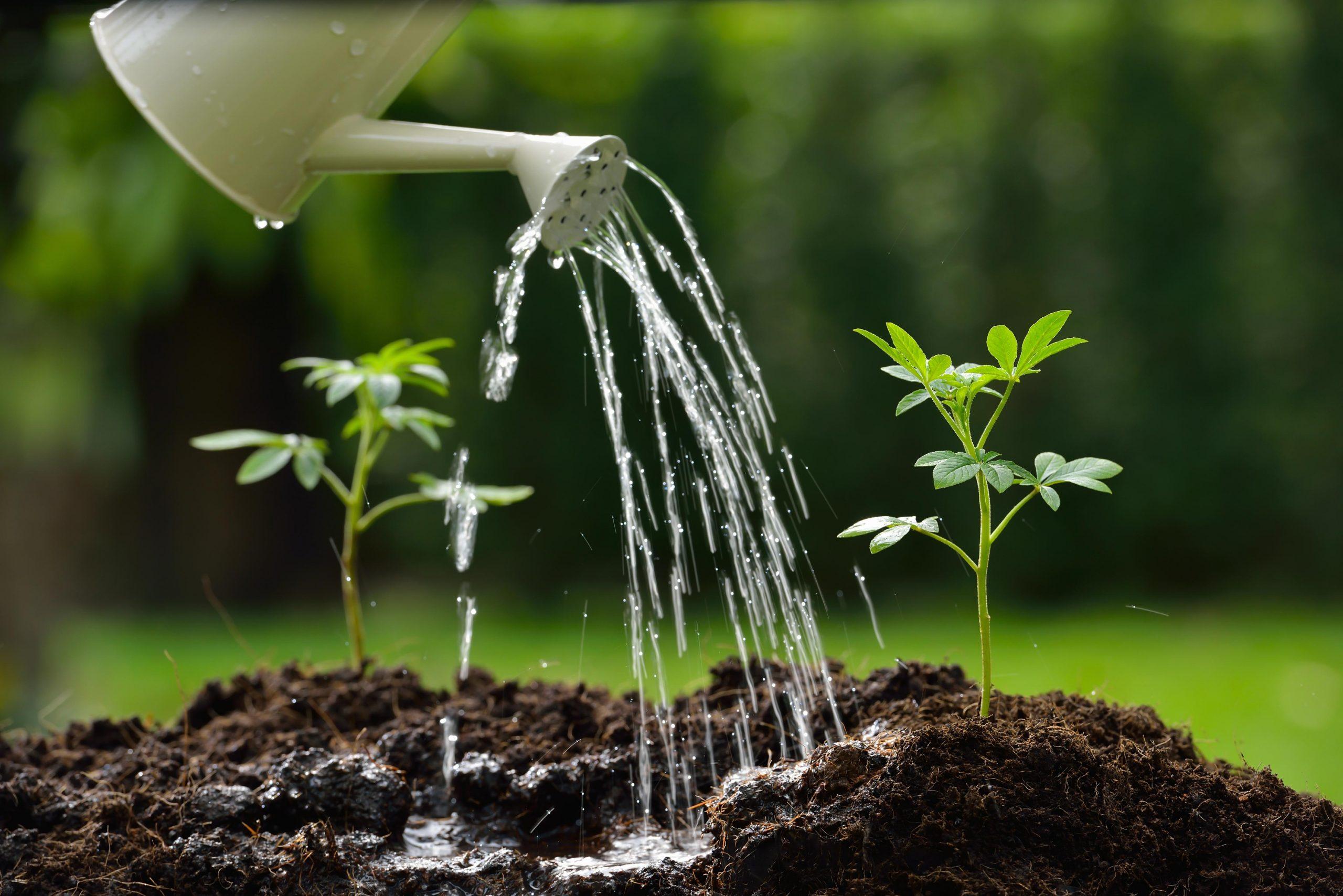 The Soil Of Appreciation